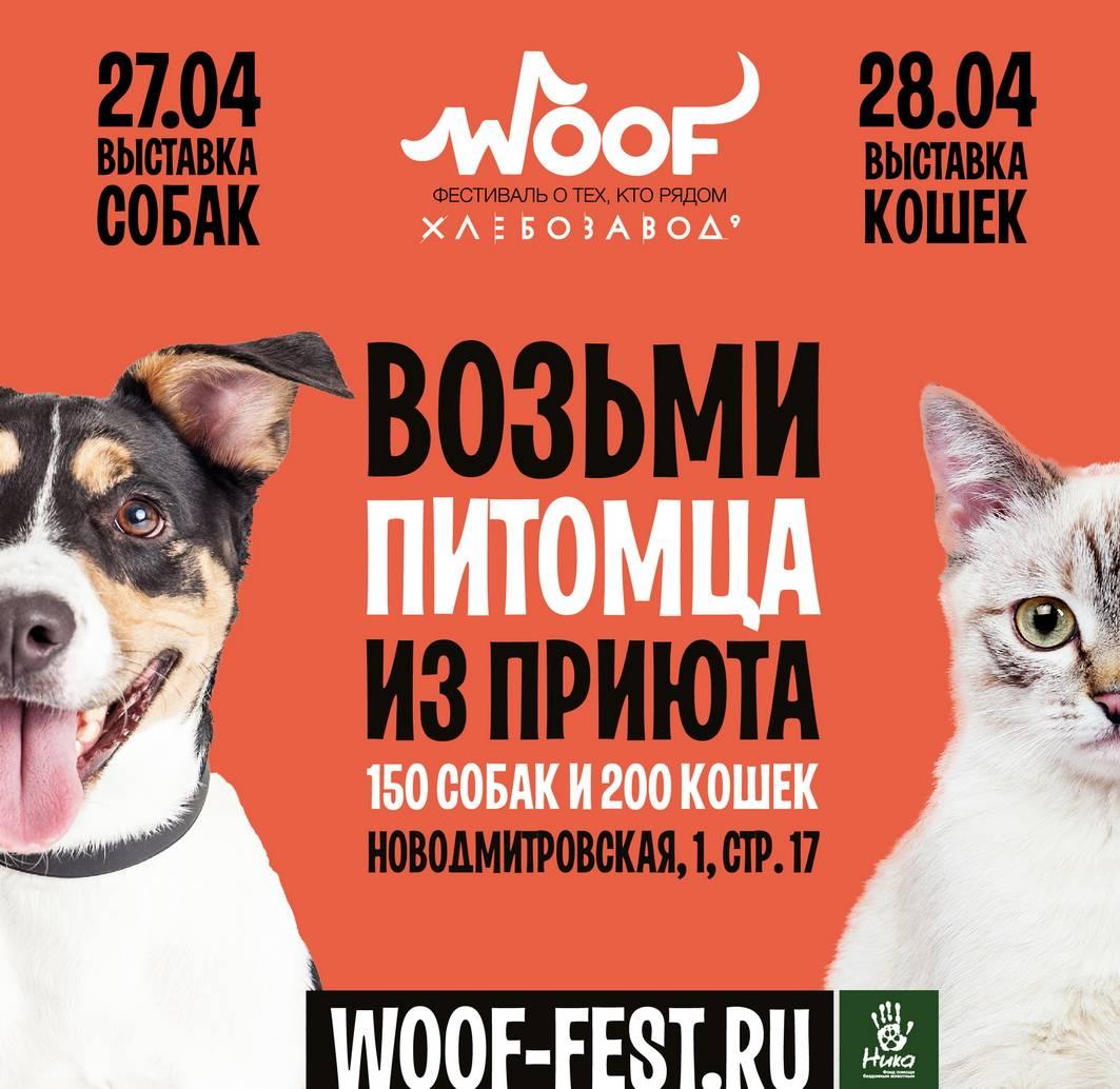 фестиваль WOOF