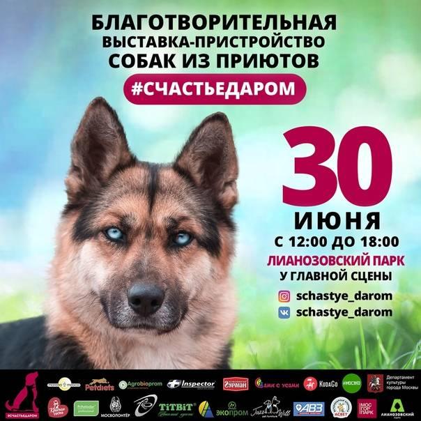 !!! Москва !!! 30 июня в Лианозовском парке состоится выставка-пристройство собак из приютов #СЧАСТЬЕДАРОМ ❤