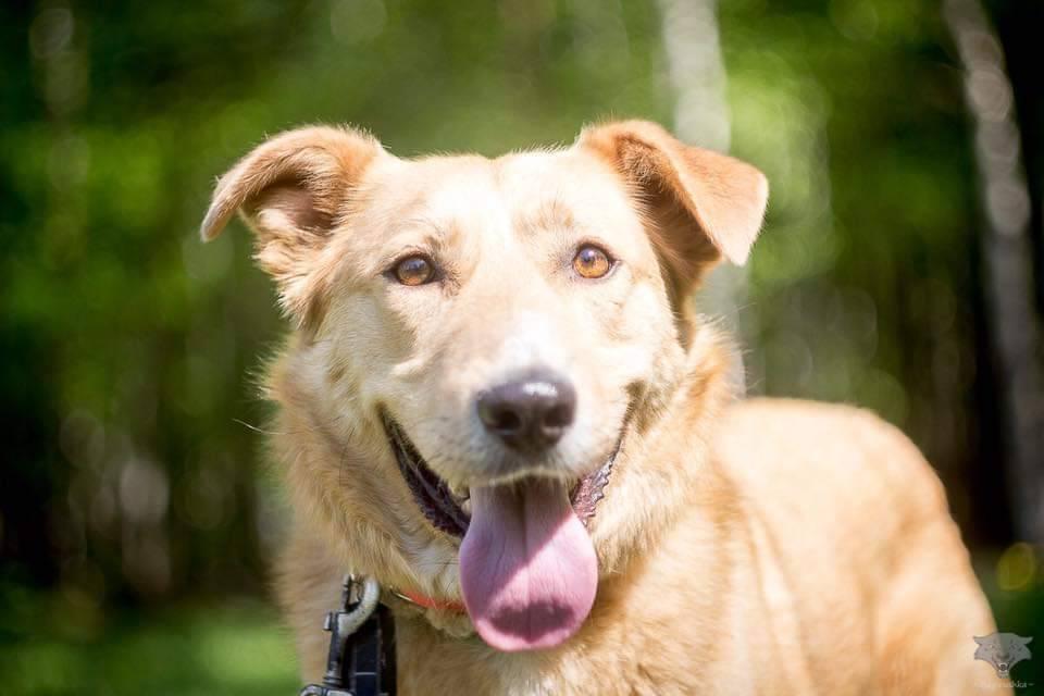 """Благотворительный фестиваль """"Собаки, которые любят"""" 3 марта 2019 года"""
