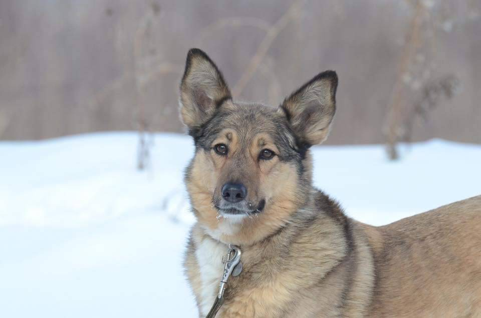 Благотворительный фестиваль «Собаки, которые любят» 03 марта 2019 года