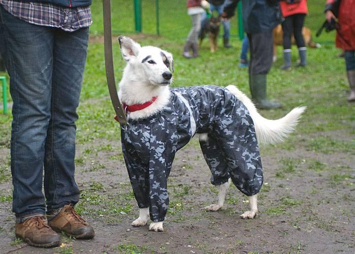 Выставка собак нашего приюта (16 мая 2015 г.)
