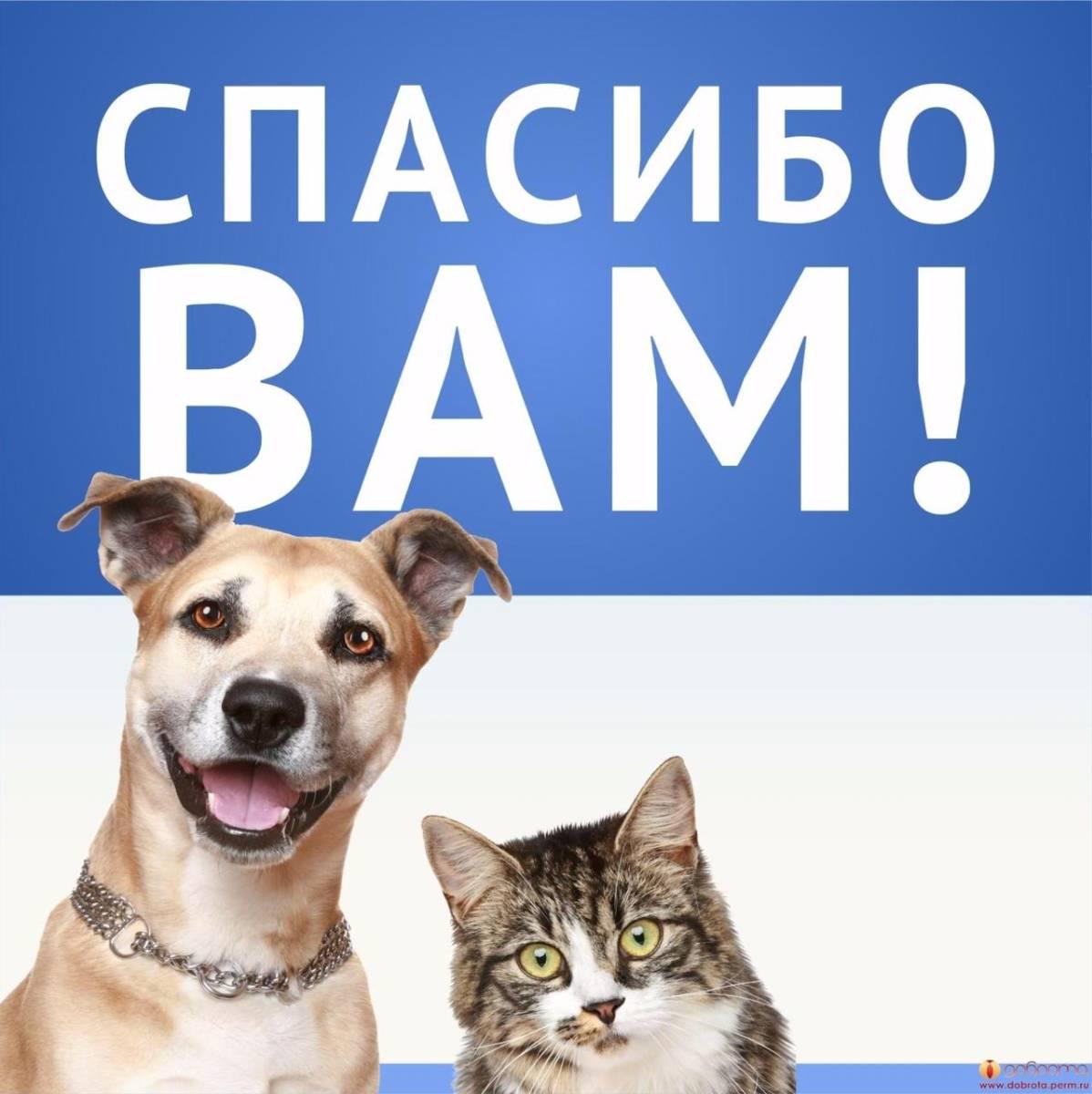 Картинки спасибо собака
